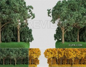 夏季秋季树木森林侧面滑进过渡转场 2组视频素材PR/AE/FCPX